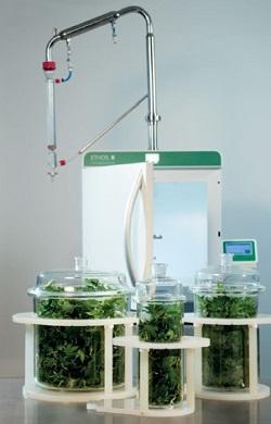 Cannabis terpene extraction