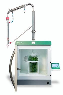 Terpene extraction form cannabis